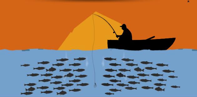 balıkçı_sazan